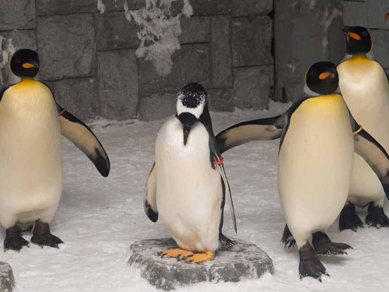 Kids of all ages will love meeting the penguins at Ski Dubai