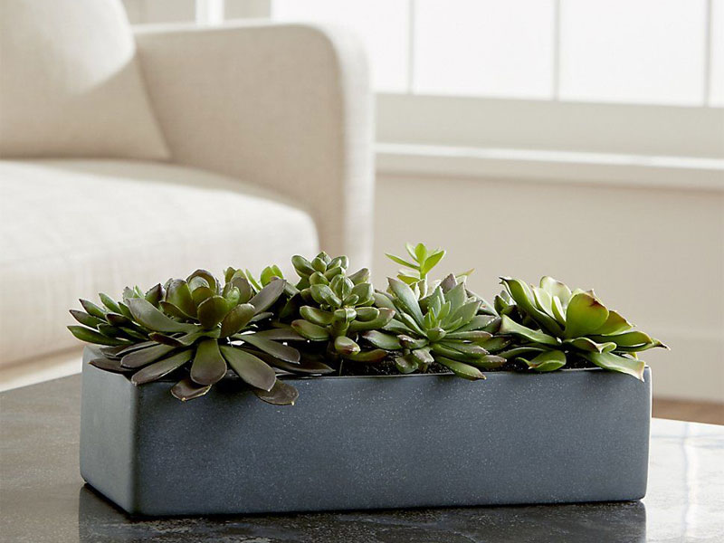 Fake plant by Crate & Barrel, available at Mall of the Emirates and City Centre Mirdif